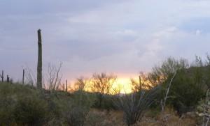 Temple Emanu-El Desert Museum Hike, Havdallah & Dinner @ Arizona-Sonora Desert Museum | Tucson | Arizona | United States
